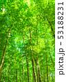 新緑 エコ 自然の写真 53188231