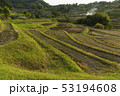 日本 稲 田畑の写真 53194608