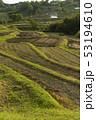 日本 稲 田畑の写真 53194610