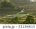 日本 植物 田畑の写真 53194615
