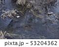 鳥 アヒル カモの写真 53204362