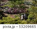 つつじ咲く風景 三室戸寺 53209665