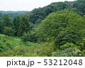 夏の緑 53212048