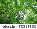新緑 53216368