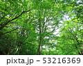 新緑 53216369