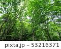 新緑 53216371