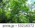 新緑 53216372