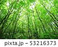 新緑 53216373