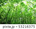 新緑 53216375