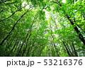 新緑 53216376