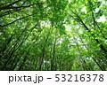 新緑 53216378