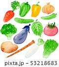 野菜 白バック 水彩のイラスト 53218683