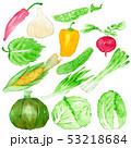 野菜 白バック 水彩のイラスト 53218684