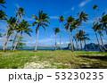 ヤシ 海 樹木の写真 53230235