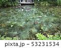根道神社の池(モネの池)岐阜県関市 53231534