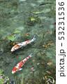 根道神社の池(モネの池)岐阜県関市 53231536