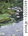根道神社の池(モネの池)岐阜県関市 53231549