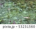 根道神社の池(モネの池)岐阜県関市 53231560