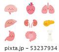 骨 内臓 臓器のイラスト 53237934