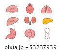 骨 内臓 臓器のイラスト 53237939