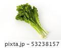 山葵菜 山葵 菜の写真 53238157