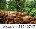 杉の木 丸太 伐採 イメージ 53240747