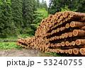 伐採された杉の木 イメージ 53240755