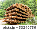伐採された杉の木 イメージ 53240756