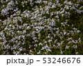 茶臼山高原 53246676