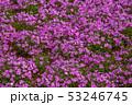 茶臼山高原 53246745