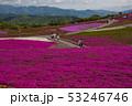 茶臼山高原 53246746
