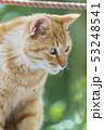 京都 哲学の道の猫  53248541