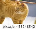 京都 哲学の道の猫  53248542