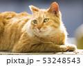 京都 哲学の道の猫  53248543