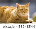 京都 哲学の道の猫  53248544