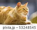 京都 哲学の道の猫  53248545