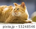 京都 哲学の道の猫  53248546