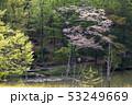茶臼山高原 53249669