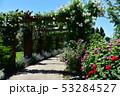 薔薇園 53284527