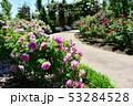 薔薇園 53284528