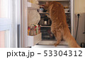 Cute red Maine Coon cat looking for food inside domestic fridge 53304312