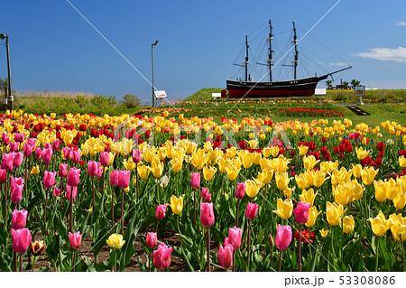 快晴の北海道木古内町でサラキ岬公園の春の風景を撮影 53308086