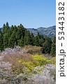 桜 春 広瀬町の写真 53443182