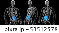 おなか 腹 腹部のイラスト 53512578