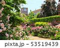 東武トレジャーガーデン。イングリッシュローズガーデンのバラと教会(5月)群馬県館林市 53519439