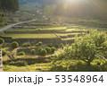 朝 米 日本の写真 53548964