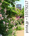 東武トレジャーガーデン。イングリッシュローズガーデンのバラと教会(5月)群馬県館林市 53579217
