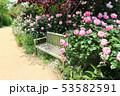東武トレジャーガーデン。イングリッシュローズガーデンのバラとベンチ(5月)群馬県館林市 53582591