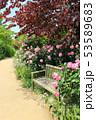 東武トレジャーガーデン。イングリッシュローズガーデンのバラとベンチ(5月)群馬県館林市 53589683