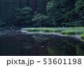 カキツバタ 53601198